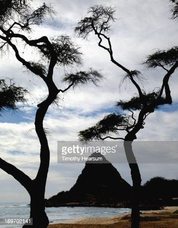 Silhouetted trees and rock formation at beach : Stock Photo