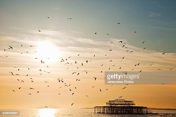 Silhouetted view of seagulls flying over Brighton pier, Brighton, Sussex, UK