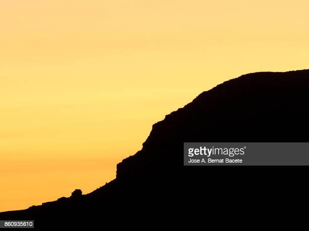 Silhouettes of a forest of trees in the hillside of a mountain in a sunset with an orange sky, Valencian Community, Spain