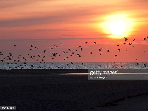 Silhouettes of birds at sunset