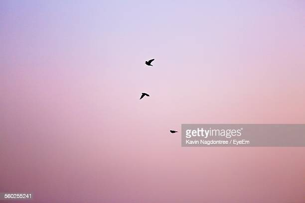 Silhouettes Of Birds In Sky