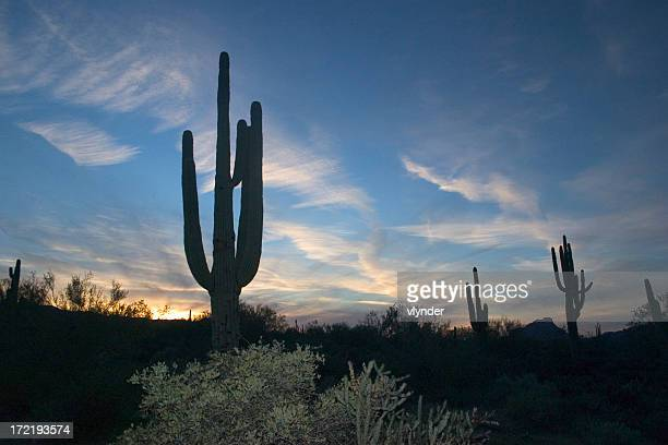 Silhouettes of cacti and plants at sunset