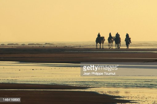 Silhouettes of camels in essaouira