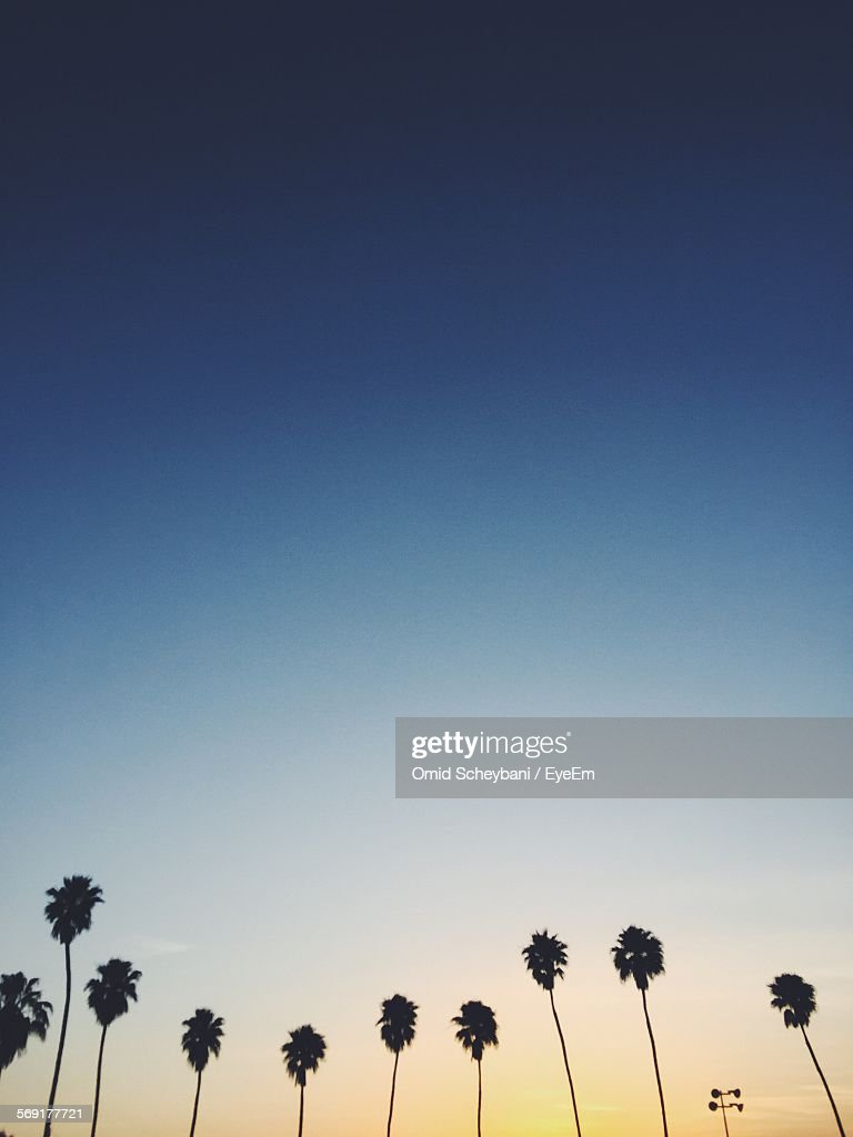 Silhouettes of palm trees in a row at sunset