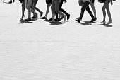 Many female feet on pavement, covered with macadam. City life, daily bustling. Black and white photo