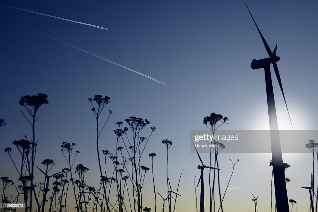 Silhouettes of plants and wind turbines : Stock Photo