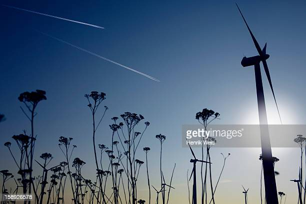 Silhouettes of plants and wind turbines