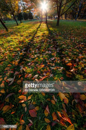 Silhouettes of trees in autumn : Stock Photo
