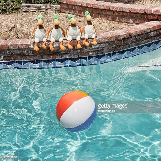 Silly ducks by pool