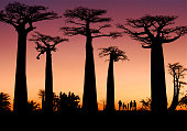 Silueta Baobabs Madagascar