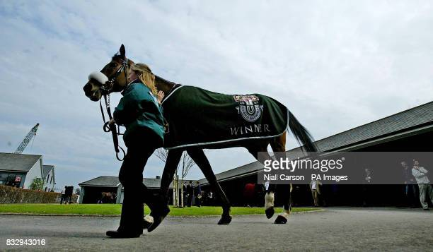 Silver Birch is exercised by stable hand Fiona Dowling at the Curragh Racecourse County Kildare