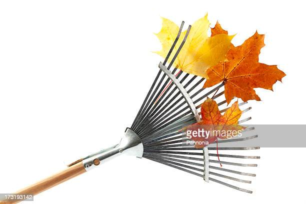 Silver rake with wooden handle and orange leaves on it