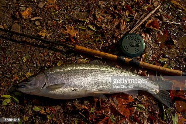 Silver steelhead and centerpin rod