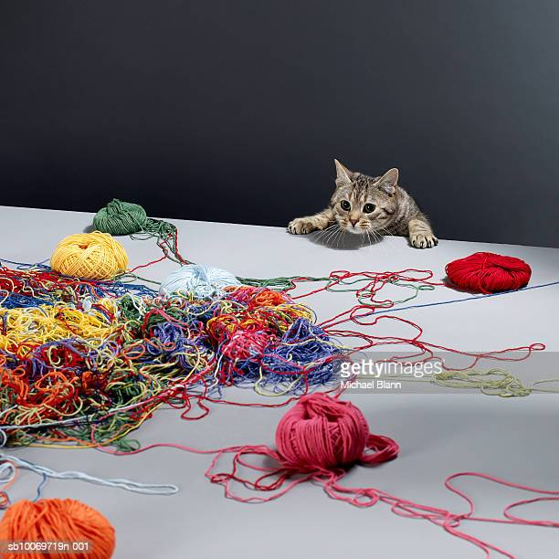 Silver tabby cat climbing over edge of table looking at pile of wool