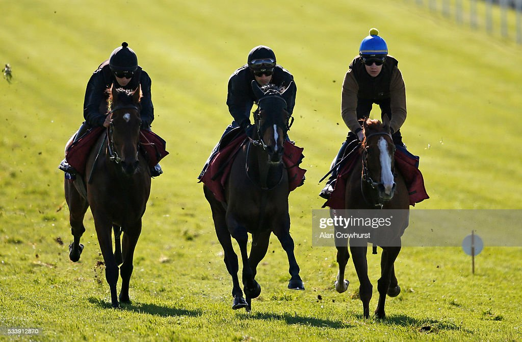 Silvestre De Sousa riding Harlequeen (C) have a racecourse gallop during the 'Breakfast with the Stars' morning at Epsom Racecourse on May 24, 2016 in Epsom, England.