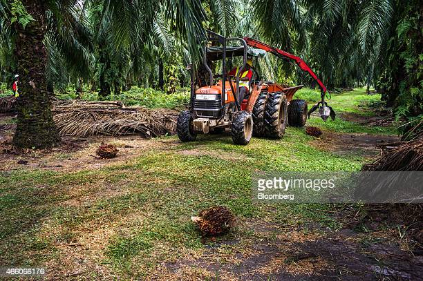 A Sime Darby Bhd employee operates a tractor with a mechanical arm to pick up harvested oil palm fruit from the ground at the company's palm oil...
