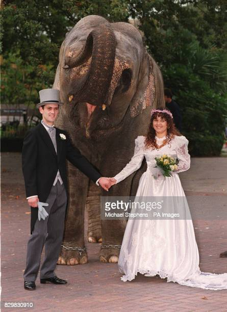 Simon and Dawn Mannali both employees of London Zoo recreate their wedding day with an elephant called Dilberta on the day that London Zoo received...