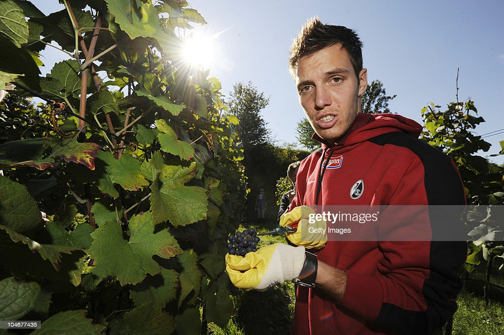 <a gi-track='captionPersonalityLinkClicked' href=/galleries/search?phrase=Simon+Pouplin&family=editorial&specificpeople=2087398 ng-click='$event.stopPropagation()'>Simon Pouplin</a> of SC Freiburg harvests grapes at 'Kaiserstuhl' on October 3, 2010 in Achkarren, Germany.