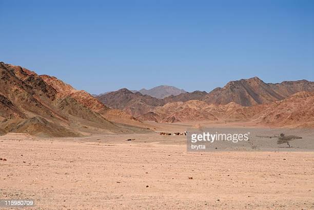Wüste Sinai mit Beduinen-Siedlung, Nabq Nationalpark, Ägypten