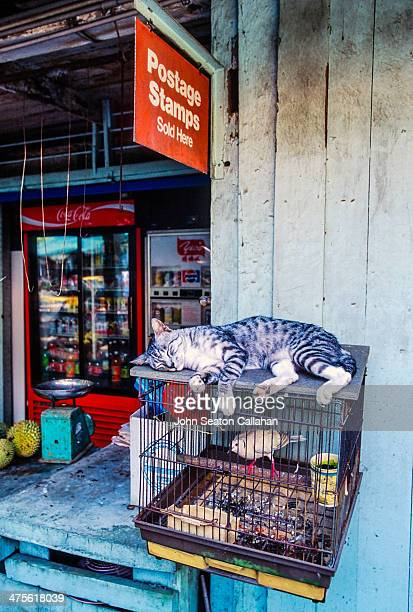 Singapore Pulau Ubin provision shop sleeping cat