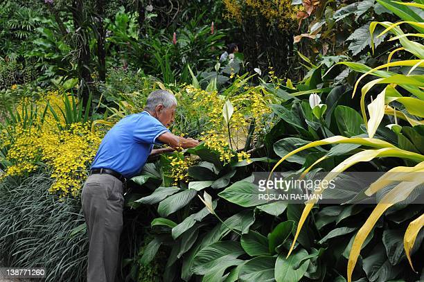 SingaporeDiplomacyBotanyOrchids by Philip Lim This photograph taken on February 7 2012 shows polishes the bronze plaque of the official opening at...