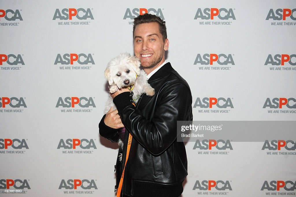 Singer Lance Bass attends the ASPCA Young Friends benefit at IAC Building on October 15 2015 in New York City
