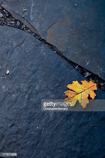Une feuille d'automne sur un sentier de promenade
