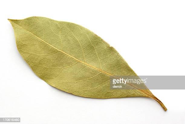 single bay leaf on white