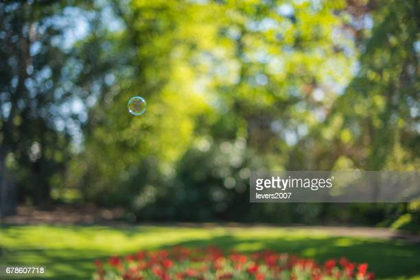 A single bubble floats over a bed of tulips, Dublin, Ireland.