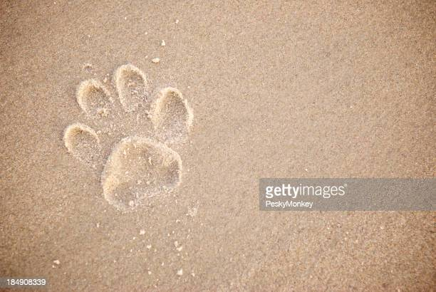 Single Dog Paw Print in Textured Brown Sand