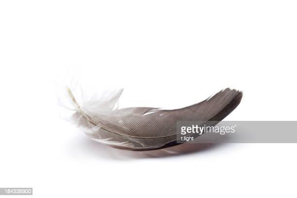 Seule plume