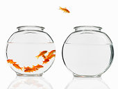 A single goldfish leaping from a crowded bowl into an empty bowl.