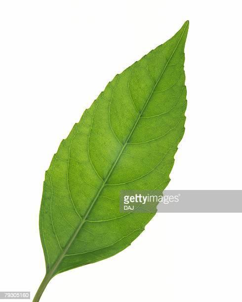 Single Leaf, High Angle View, Close Up
