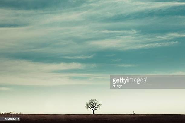 Single lonely tree on horizon of farmland
