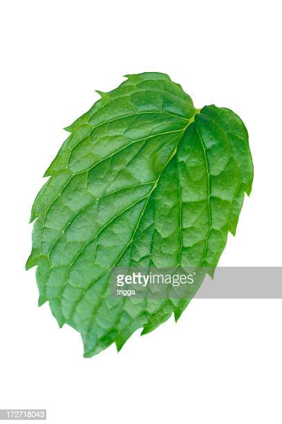 Single mint leaf