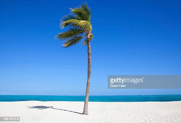 Single palm tee on beach.