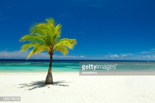 Single palm tree pictures - significado de prefecto escolar fish picture