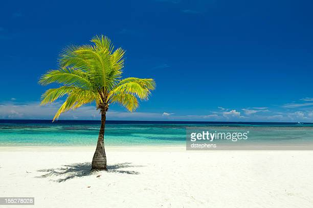 Single palm tree on tropical beach