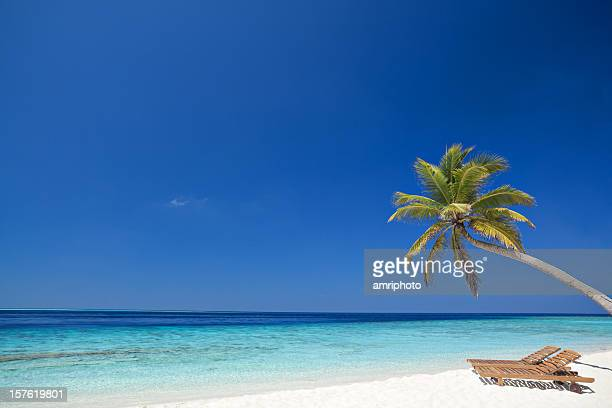 single palmtree and beach beds