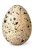 Single quail egg vertical isolated on white background