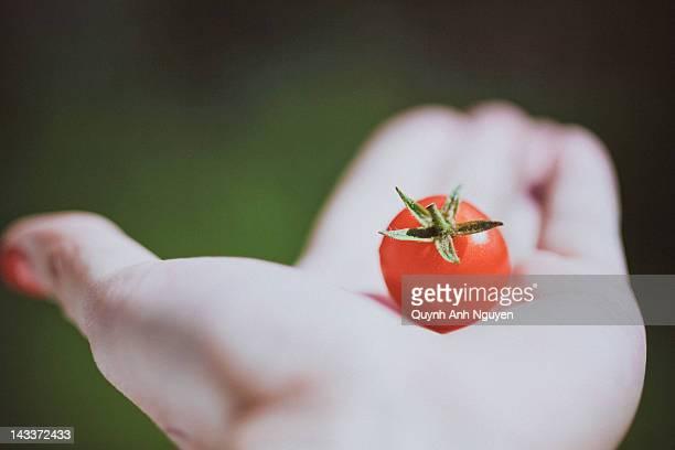 Single red cherry tomato