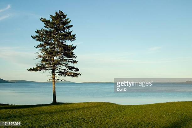 Single solitary tree on the grass by water