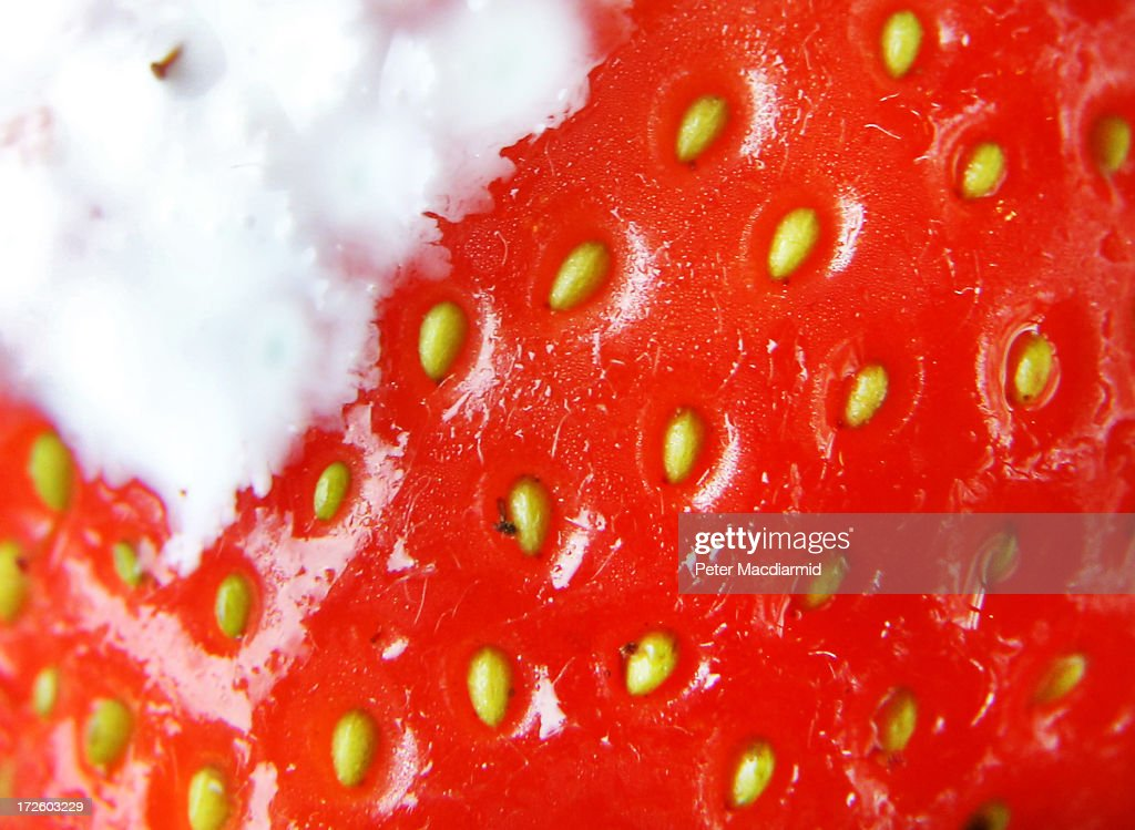 A single strawberry with cream is seen in this close up image at the Wimbledon Lawn Tennis Championships on July 2, 2013 in London, England.