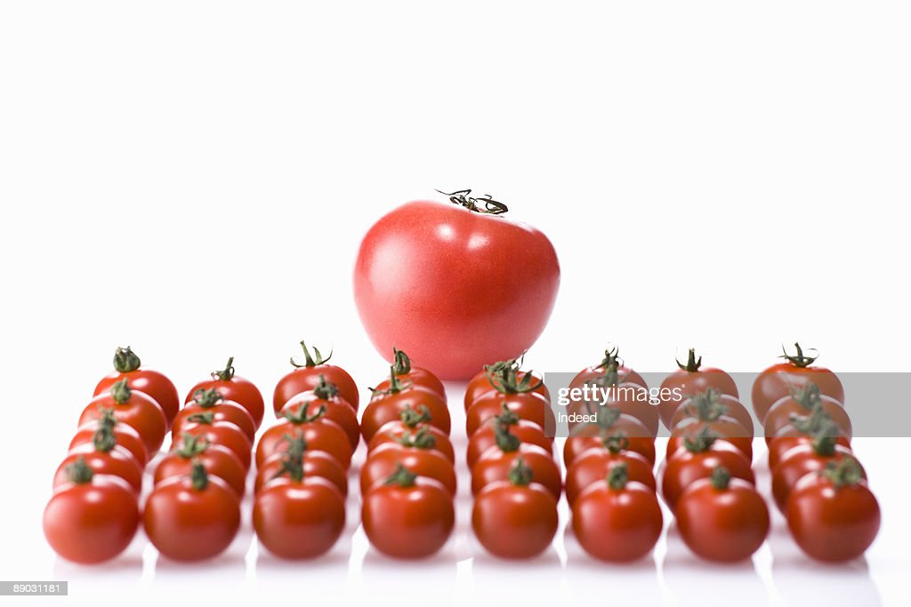 Single tomato with cherry tomatos : Stock Photo