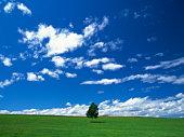 Single tree in a wide open field,  with a full sky of clouds. Hokkaido,  Japan