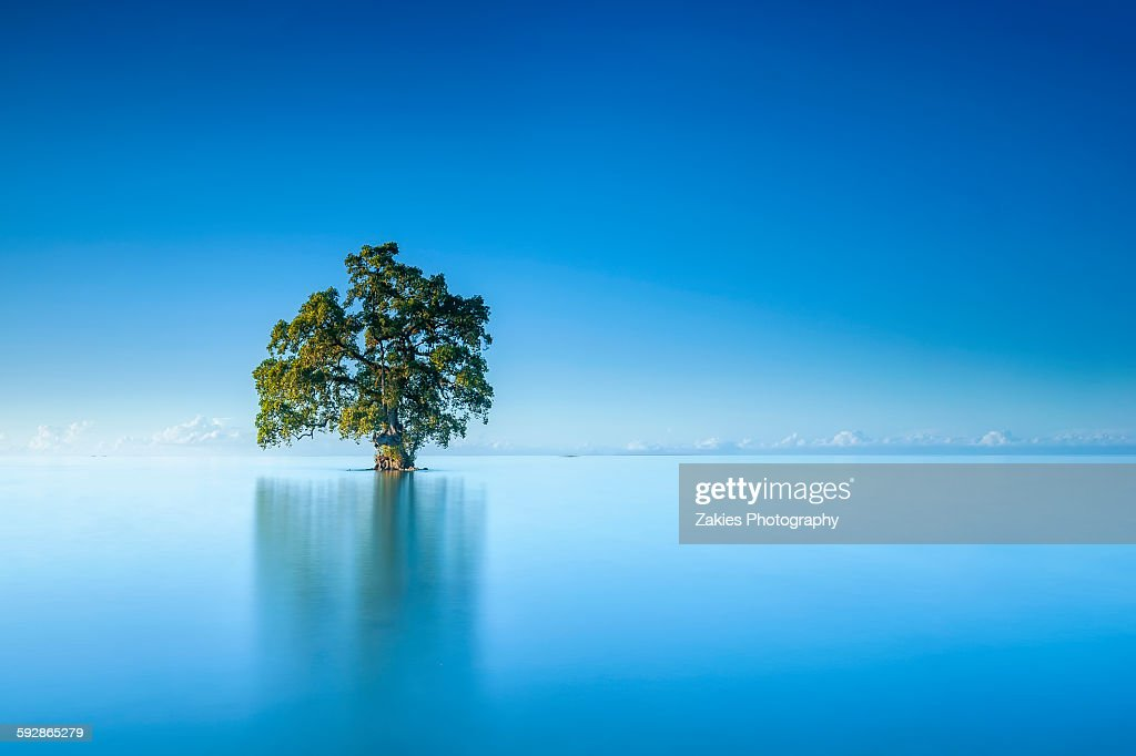 Single Tree In Morning at Lahad Datu, Sabah