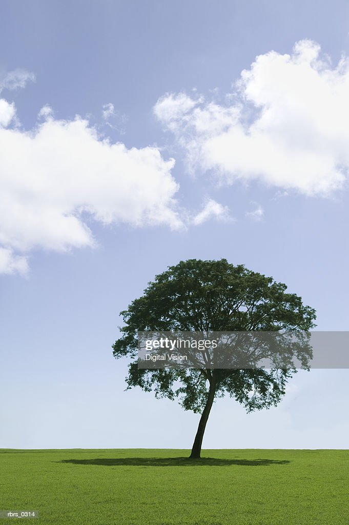 Single tree on a field : Stock Photo