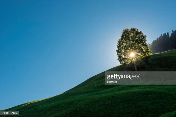 Einzigen Baum auf einem Hügel