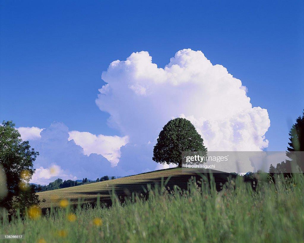 Single tree on hill, Switzerland : Stock Photo