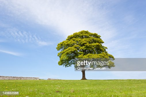 Single tree on spring day : Stock Photo